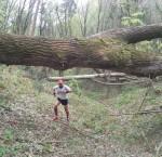 Belgrad Ormanı Arazi Koşusu-Belgrado Forest Trail Run